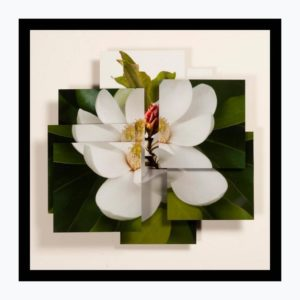 MaryRezny Magnolia 300x300 - Norton Center to receive 2017 Governor's Award in the Arts for community outreach